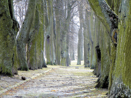 Senojo miesto sodo medžių išsaugoti nevertėtų